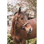"1"" HORSE PROFESSIONAL HAZELNUT SHOW HALTER"