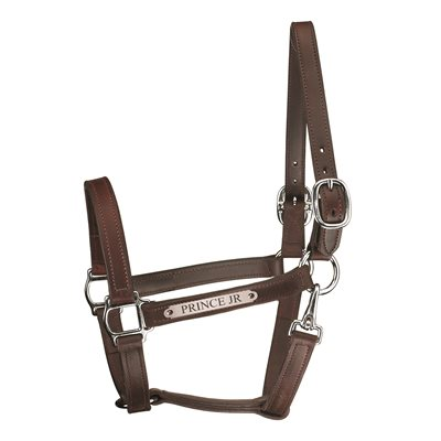 "HAV W / CHROME HORSE 1"" TRACK W / SNAP HALTER W / PLATE"