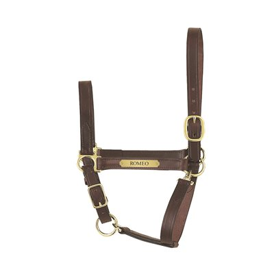 HAVANA YEARLING ECONOMY LEATHER HALTER W / PLATE