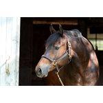 HORSE HAVANA PROFESSIONAL SHOW HALTER