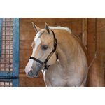 "1"" YEARLING HAVANA TURNOUT HALTER"