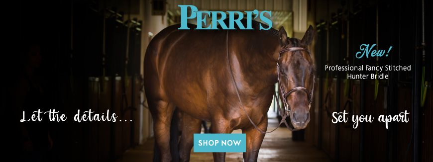 Brown horse standing in barn isle with bridle on